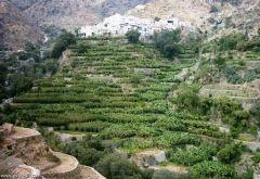 «وادي الغيل» في محافظة «المجاردة» وجهة سياحية ينتظر الاستثمار واستكمال الخدمات