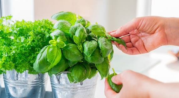 هذه المجموع من النباتات المنزلية يمكن لها أن تحسن #الصحة وتخفف #التوتر