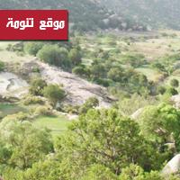 جابر القحطاني - العرعر يعالج عسر البول وحصوات المجاري البولية