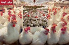 تعاونية منتجي الدواجن بعسير تقر إنشاء مسلخ ومصنع للحوم الدواجن بثلوث المنظر ب200 مليون ريال