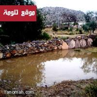تقرير// مزارع تنومة تنتظر سدوداً ترابية و«حرث المدرجات» للحفاظ على مياه الأمطار