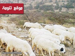 الأهالي يطالبون بحماية مقابر تنومة من الحيوانات الضالة