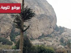 الدفاع المدني يخمد حريق جبل منعاء بالطفايات اليدوية وأغصان الأشجار