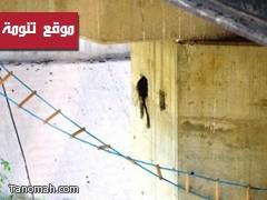 الدفاع المدني يتدخل لإنقاذ قرود عالقة بكوبري في رجال ألمع