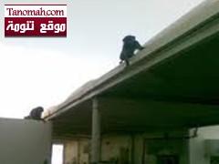 """""""قردة"""" تتسلل الى داخل مبنى كلية الباحة للبنات وتثير الرعب بين طالباتها"""