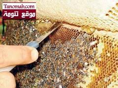 الحنيني يفتتح مهرجان العسل اليوم في رجال ألمع