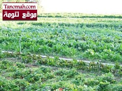 حملة تستهدف مختلف شرائح المجتمع في كافة مناطق المملكة للتوعية بالزراعة العضوية