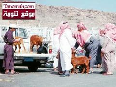 قلة المعروض يرفع أسعار الماشية في الأسواق