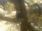 أصوات وآثار أقدام تُرجِّح عودة «النمر العربي» إلى جبال تنومة