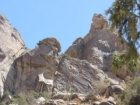 تقرير مصور عن عمل فريق الحماية الفطرية في جبل منعاء