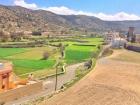 تناغم جمال الربيع مع مزارع القمح في مدرجات تنومة