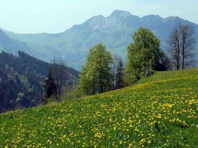 الغطاء النباتي يزداد في العالم