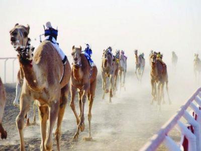 أكثر من 95 مليون ريال جوائز سباقات الهجن في مهرجان الملك عبد العزيز للإبل