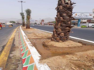بلدية بارق تبدأ بزراعة 200 نخلة في الشارع العام وسط المحافظة
