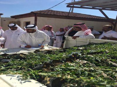 تدشين حملة زراعة السدر بمركز مربة
