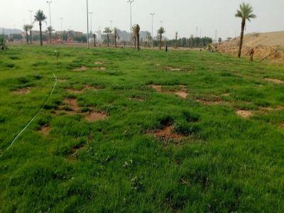 أمانة عسير تعيد تأهيل حديقة مربه بأكثر من 320 شجرة