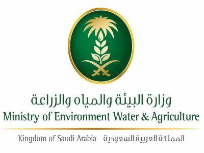 """""""البيئة"""" تتوقع استمرار نشاط الجراد الصحراوي بسبب الظروف المناخية"""