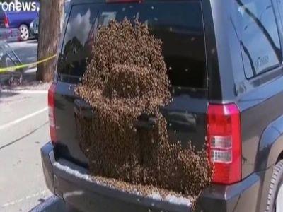 في حادثة غريبة : سرب من النحل يتجمع على سيارة