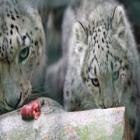 اهم صور الحيوانات في اخبار العالم