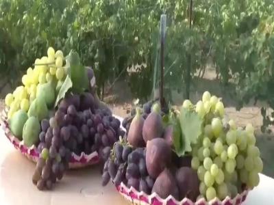 #فيديو: مزارع #الماوين تفرد المذاق وجودة الانتاج