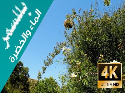 قرى ال عبيد في #بللسمر جنة على الأرض