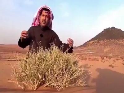 عجينة الخبز عند العرب والفرنسيين وتأثيرها على الصحة