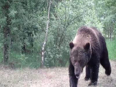 #فيديو نادر: حيوانات تشيرنوبيل